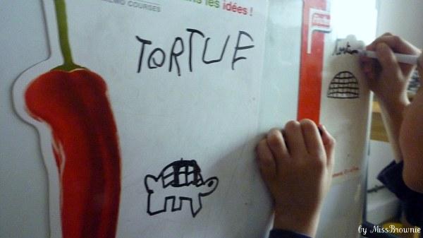 tortue-dessin