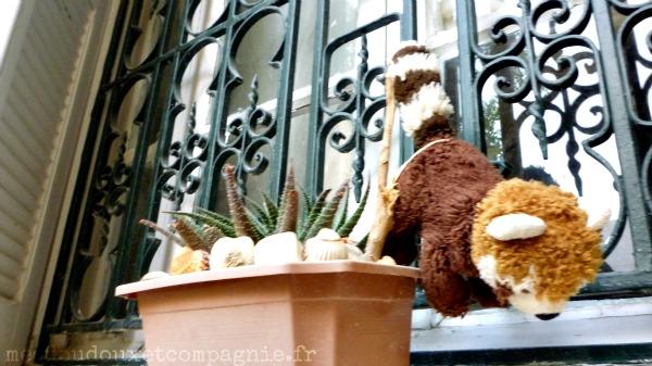 Les m saventures de ratou petit panda roux en tunisie - Petit cochon pendu au plafond ...